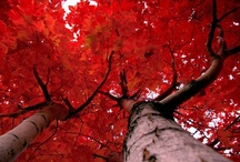Trees, happy people plant them