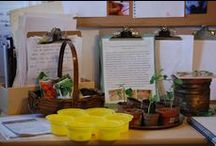 Reggio Emilia Approach / Love Reggio? Me too :D Here's some links to help you implement Reggio in your home or school.