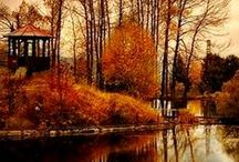 Leaves A Fallin' / I love the Fall!!  Cozy fires...hot cocoa..or a cup of joe...baking something yummy in the oven or simmering a pot of soup. The crisp breeze in your face when you go for a walk!! Bundled up so everything is warm except your nose!! Yep...I LOVE Fall! / by Nancy Craig
