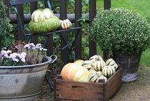 Herzstück Garten / Photos from my garden