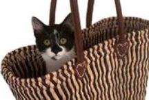 Cats in baskets!