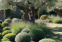 Jardins & terrasses de Provence