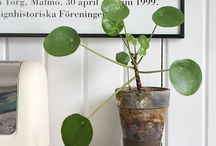 Plants | Pflanzen | Green / Decorating with plants