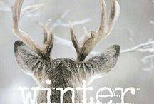 Winter / Winter wonderland