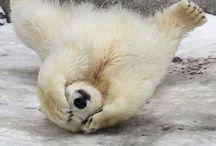 Polar Bears :) / by Sherri