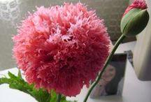 Flowers- Virágok