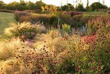 Siergrassen / Een tuin gevuld met verschillende kleurrijke grassen voor een ongekend buitenleven gevoel.