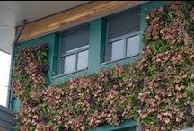 Verticaal tuinieren / Groen verwerkt tegen verticale wanden. Kleine tuinen krijgen zo toch voldoende groen en grote tuinen een prachtige luxe uitstraling.
