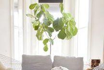 Office Plants / Indoor Interior Design Plants