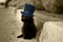 Steampunk Kitty / by Kimberly Pitt