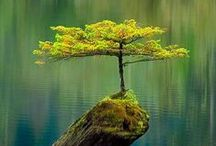 Nature - Trees / #Naturaleza #Tree #Árbol #Árboles #Flora / by Ruth Díaz