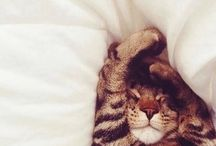 Cats / This page full with adorable cats makes us smile on Mondays!