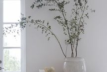 /Plants/