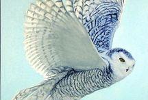 OWLS / Linda ave