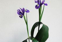 IKEBANA / Arte com flores