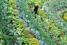 Regenerative Agriculture / Everything about #sustainablefarming, #regenerativeagriculture #farming tips, inspirational #farmers and innovative ideas and initiatives