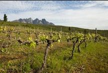 Welvanpas Wine Farm / Welvanpas is situated near Wellington, next to the wellknown Bainskloof pass. The farm has an exceptional natural beauty due to the surrounding protea veld and the majestic Hawekwa and Groenberg mountain ranges.  http://www.go2global.co.za/listing.php?id=2187&name=Welvanpas