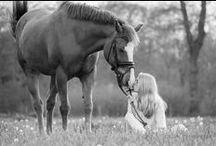 Horses photoshoots / Horse photoshoot