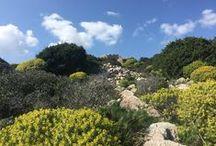 Sardegna: l' isola dell' elicriso / Posti, storie, cultura e sapori dell' isola del mio cuore