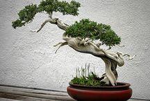 - bonsai -