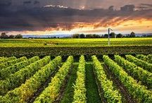 Wine & Wineries / A few of our favorite wineries and wine experiences worldwide. What to drink and where to drink it. Plus charts and guides about wine and great wine products.