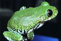 Amazing Amphibians, reptiles / FrogsToads snakes etc