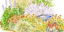 Záhrada / Garden
