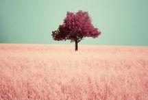 Soooo pink