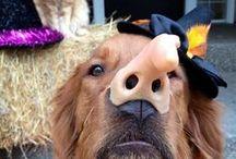 Halloween & Fall Photo Contest 2013