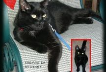 LOVE Black Cats / In loving memory of my beautiful Batman.