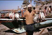Fischerei Historisch / Historische Bilder von Anglern und Fischern