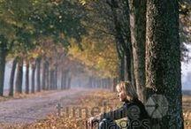 Herbstzeit / Der Herbst naht...und mit ihm buntes Laub, goldenes Licht und lange Spaziergänge.