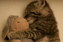 Just cute