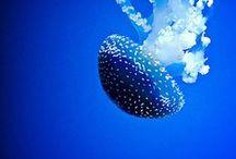Blue things / by Karin Peirce