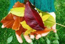 Autumn / Season of mist and mellow fruitfulness