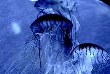 Elegant Blue / The sea as deep, as the broad sky