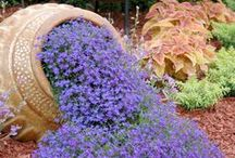сад=цветники и клумбы