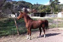 Viggo's Bloodlines / Polish Arabian Horses who are either ancestors of Viggo or offspring of his ancestors.
