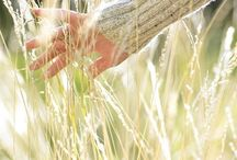 ~ SONG OF THE WHEAT  ~
