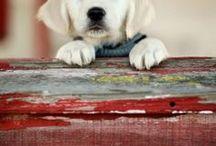 ~ DOG COTTAGE ~