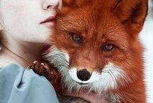 ~ LITTLE FOX CABIN ~
