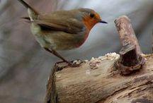 Ocells d'arreu! (Birds of the world)