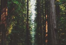 • Nature •
