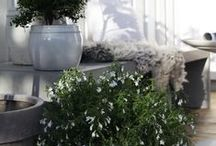 Courtyard Gardens / Ideas for small but perfect outside spaces