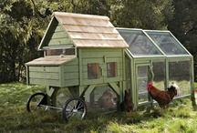 chickens fly the coops / by Connie Inman Somero