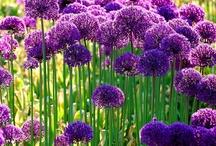 Flowers / by Amanda Box
