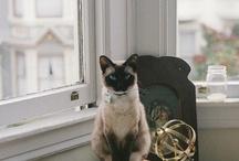 Kitties / by Amanda Box