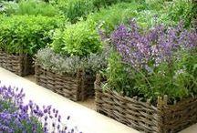 Gardening - Veggies / Veggie plots and growing