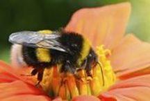 Gardening - Wildlife / garden wildlife & bird feeding