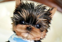 cute stuff / This board has pictures of cute little things like puppies babies kittens and much more..... Hope you like it!